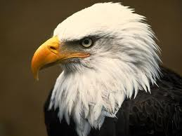 Eagle can Fly Now